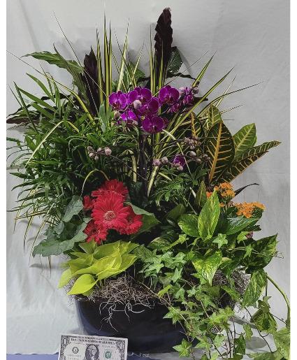 Living Beauty Basket Dishgarden in Fulton, NY - DeVine Designs