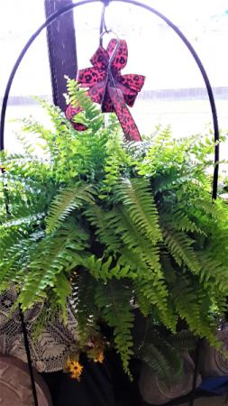 Beauty of the fern green fern