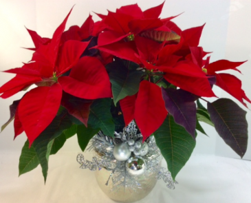 Bedazzled Poinsettia