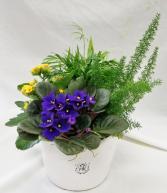 Bee Cheerful Planter