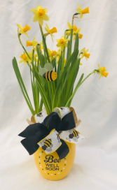 Bee Well Daffodils Blooming Plant