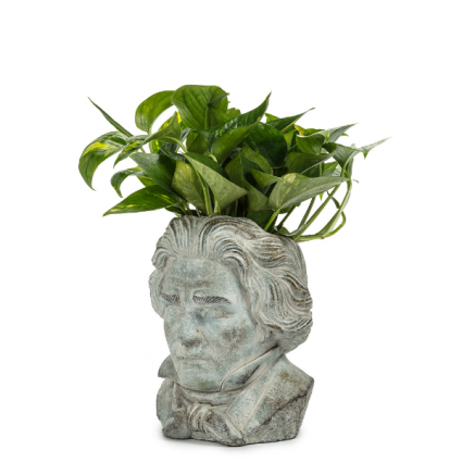 Beethoven planter holds 4