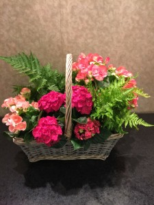 Begonia and Fern Garden Blooming