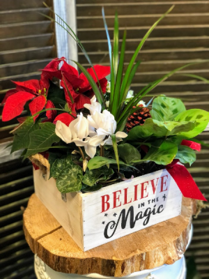 Believe in the Magic Holiday Plant Box Plants in Fairview, OR | QUAD'S GARDEN - Home to Trinette's Floral