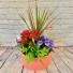 Bella Garden  Flowering Tropical Dish Garden