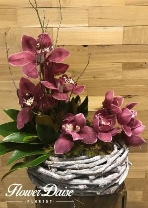Belle Arrangement in Ferntree Gully, VIC | FLOWER DAISE