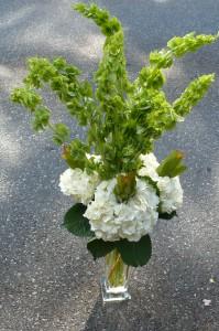 Bells of Ireland Fresh Cut Garden Flowers