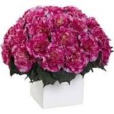 Berry Carnations