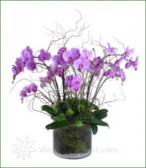 Best Pinks Orchid Planted Container