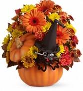 Bewitched Cat Bouquet                   T11H100A fresh keepsake arrangement