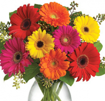 Mixed colored Gerberas Daisies arranged in a Vase  With seasonal filler...color gerberas may vary