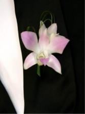 Bi- color Dendrobium