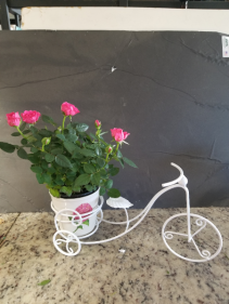 Bicycle Planter Mini rose brush