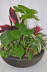 Big and Beautiful Plant Assortment Design