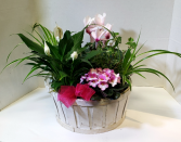 Big Mamma Indoor flowering planter basket