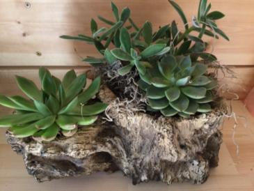 Birchwood Succulent Planter