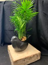 Bird arrangement  green plant