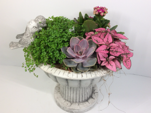 Bird Bath Planter  in Troy, MI | DELLA'S MAPLE LANE FLORIST