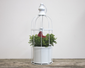 Bird Cage Winter Fern