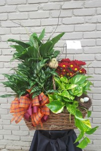 Bird Nest Plant Basket Plant
