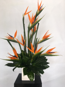 Bird of Paradise Arrangement In Ceramic Cube