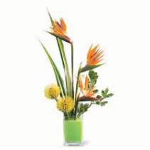 Bird of Paradise Tropical Look Tropical Arrangement