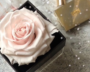 Preserved Roses  Bird Rose Life Long Rose Preserved Rose in Square box in Chesterfield, MO | ZENGEL FLOWERS AND GIFTS