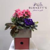 Birdhouse Planter Plant