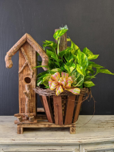 Birdhouse with Golden Pothus  planter