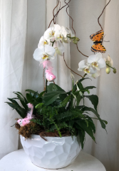 Birds and Butterflies  Orchid Planter