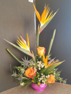 Birds from paradise  in Regina, SK | Regina Florist
