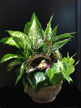 Birds Nest  Dish Garden