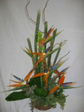 Birds of Paradise Center Piece