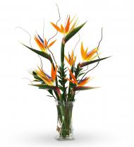 Birds of Paradise Winging Your Way Fabulous Birds of Paradise