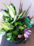Birthday Dish Garden Live Plants