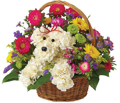 Best Wishes Dog-Able Bouquet