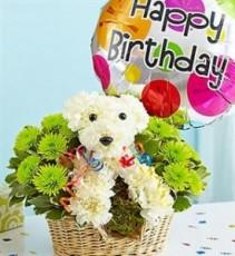 """Birthday """"Party Dog"""" Birthday"""