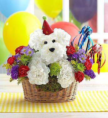 Birthday Party Pup Birthday