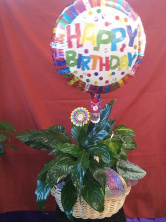 Birthday Plants Basket