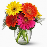 birthday wishes vase of gerbera daisies