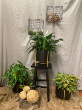 Black and Gold plant stands