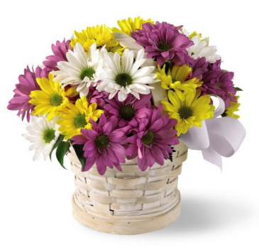 Blissful Basket of Daisies