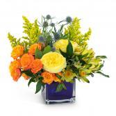 Bloom with Brilliance Arrangement