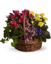 Bloomimg Garden Basket