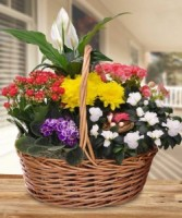 Bloomin Flawors For you. Roma  florist & Green