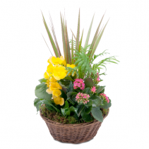 Bloomin' Sunshine Basket Arrangement