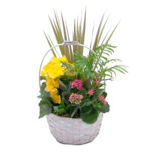 Bloomin' Sunshine Days Basket  in Zanesville, OH | FLORAFINO FLOWER MARKET & GREENHOUSES