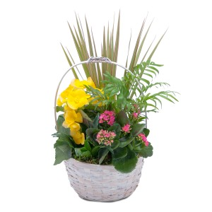 Bloomin' Sunshine Days Basket Arrangement in Spring, TX | TOWNE FLOWERS
