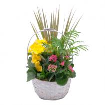 Bloomin' Sunshine Days Basket Arrangement