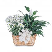 Blooming and Green Plant Combination Basket
